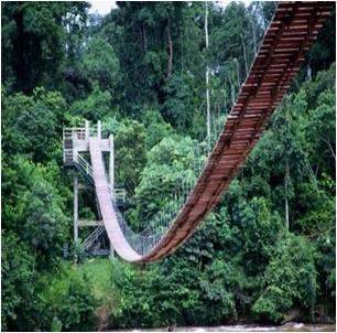 Hanging Bridge at Korup National Park