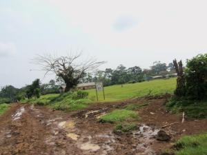 Typical Cameroonian Road