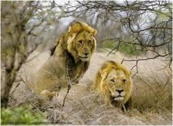 Waza Wild Cats
